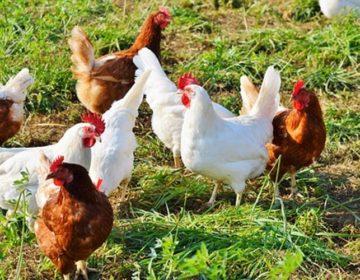 Opelješio kokošinjac i spremište – Kako li je odnio sve to što je ukrao?