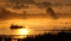 Pet država prvi puta uspostavlja rezervat biosfere Mura-Drava-Dunav