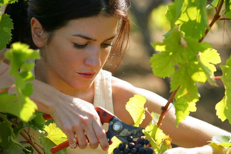 ČUDESNO VOĆE KOJEM NEMA PREMCA Sedam zdravstvenih dobrobiti grožđa