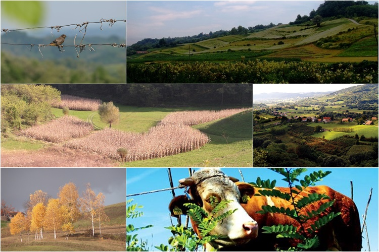 FOTOGALERIJA IZ GRADA KLANJCA: Zamamni prizori flore i faune!